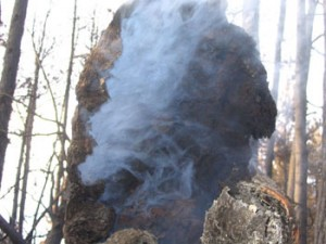 Smoke in tree
