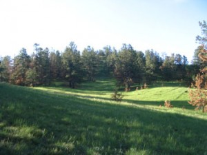A green meadow with green trees.