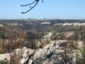 Canyon top with green grass and burned trees.