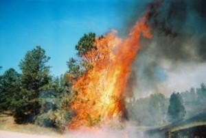 flames1web