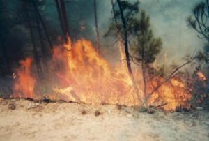 flames5web