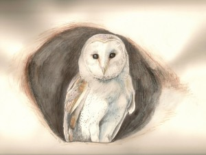 smallBarnOwl-300x226