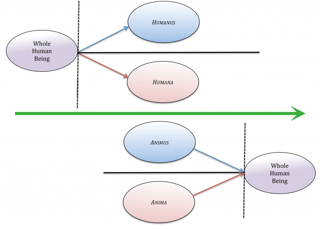Figure 5. The humanus and humana are produced by splitting of the psyche's view of nature. The first splitting event, which was historical, is recreated in each new generation by cultural cues such as The Dark Forest, Fiery Desert Myth. By contrast, the animus and anima of Jung are naturally separate states that integrate during maturation. The green arrow between the two diagrams represents direction of development over time.