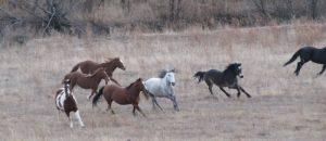 horses_running
