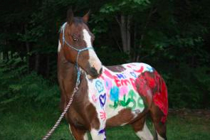 horse disrespect