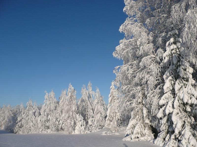 Edge of Havukkavaara forest