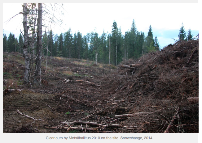 boreal clear cutting by Metsähallitus
